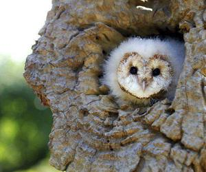 owl, nature, and cute image