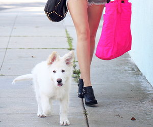 miley cyrus, dog, and mate image