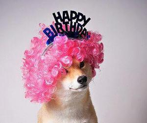 adorable, dog, and happy birthday image