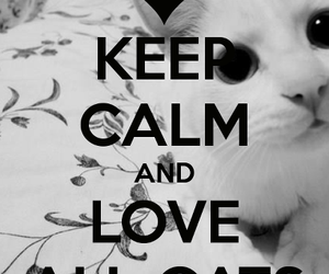 cat, keep calm, and love image