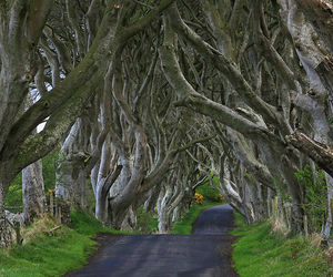 bent, Northern Ireland, and trees image