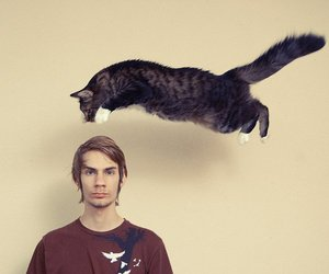 cat, jump, and photo image