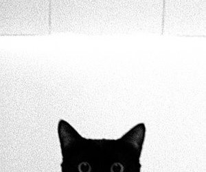 cat, photography, and black image