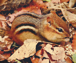autumn, squirrel, and leaves image