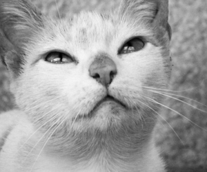 b&w, cat, and eyes image