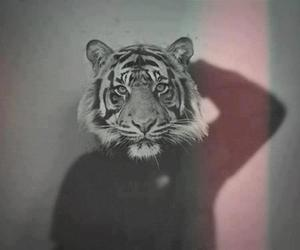 tiger, black and white, and hipster image