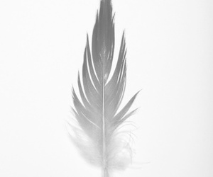 black, feather, and indie image