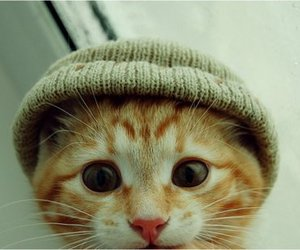 beanie, kitten, and cute image