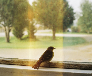 bird, vintage, and window image