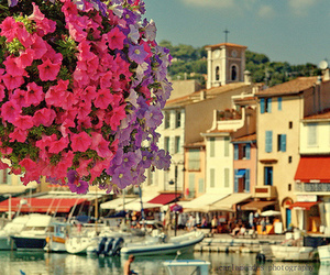 flowers, boat, and city image