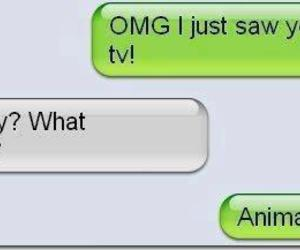 animal planet, chatting, and death image