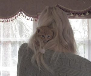 cat, blonde, and kitten image