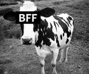 bff and black and white image