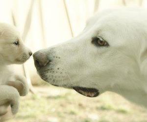 dog, animals, and adorable image