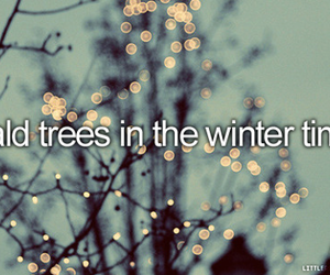winter, bald, and trees image