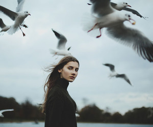 seagull, birds, and photography image