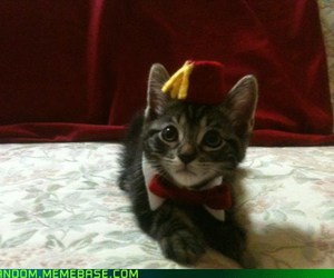 cat, doctor who, and fez image