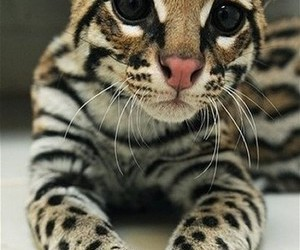 cute, cat, and animal image