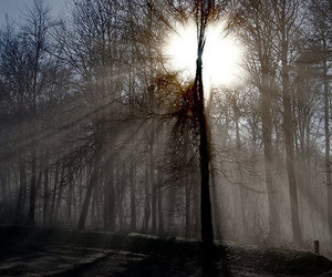 light, trees, and nature image