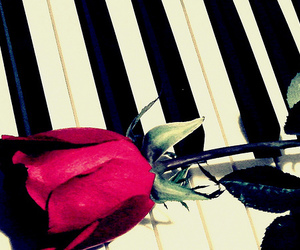 piano, flower, and music image