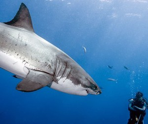 divers, shark, and coast of mexico image
