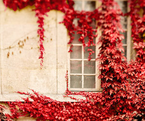 autumn, red, and window image