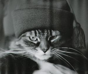 black and white, hat, and cat image