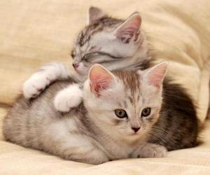 cat, photo, and cute image
