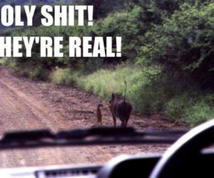 lion king, funny, and lol image