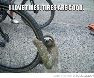 sloth, cute, and funny image