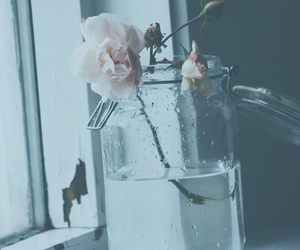 rose, flower, and water image