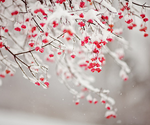 winter, snow, and flowers image