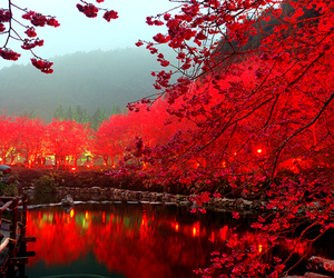 red, japan, and nature image