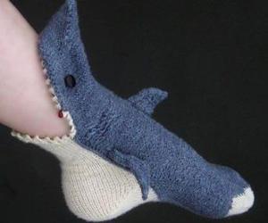 shark and socks image