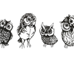 owl, cute, and black and white image
