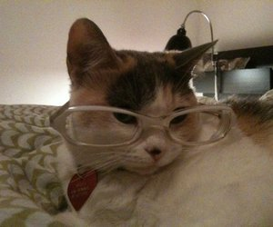 cats with glasses, sophisticated kitten!, and sophisticated kitten !!! image