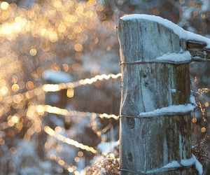 photography, snow, and sun image