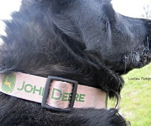 lab, country, and johndeere image