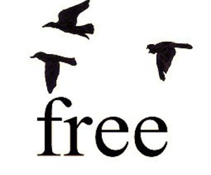 free, bird, and quote image