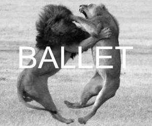 animal, ballet, and lion image