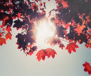 sun, leaves, and red image