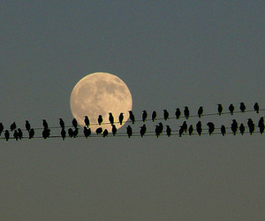 birds and moon image