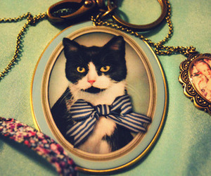 cat, fashion, and necklace image