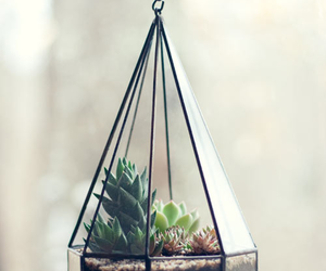 plants, cactus, and succulents image