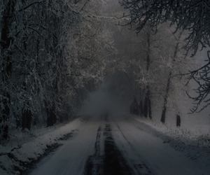 dark, forest, and winter image