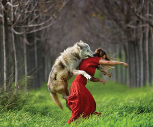 art, photography, and wolf image