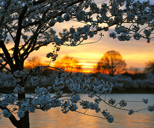 photography, flowers, and sunset image