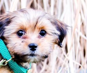 adorable, baby dog, and cute puppy image