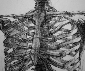skeleton, art, and bones image