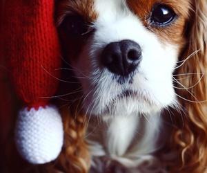 dog, christmas, and sweet image
